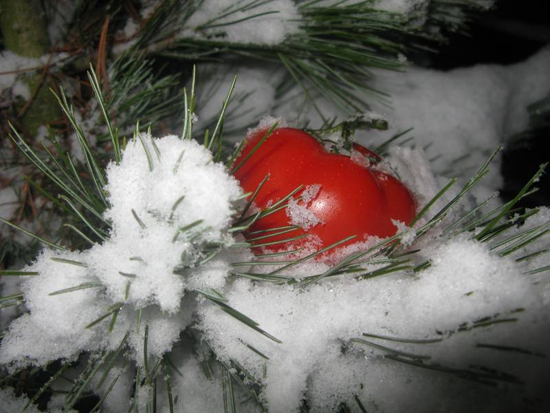 Paradajz, smrekca in sneg