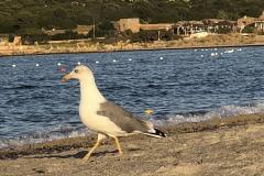 Sardinia2020_IMG_4314
