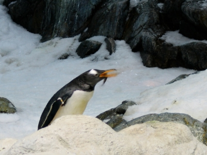 hladilnik_pingvin