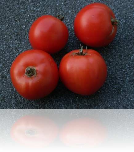 paradajz_4-20_09_2009