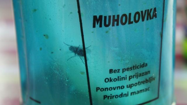 muholovka2