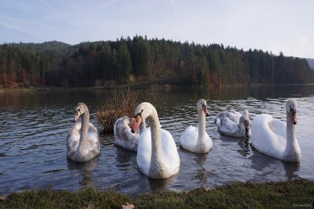 gr_jezero-07